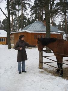 Культурные лошадки